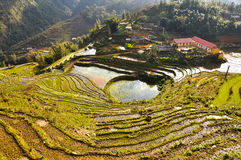Terraced rice field in Northern Vietnam Stock Image