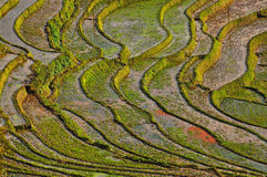Terraced rice field in Northern Vietnam Royalty Free Stock Images