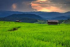 The Terraced rice field over mountain range Royalty Free Stock Photos