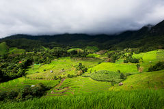 Terraced rice field in Pa Pong Pieng. Chiang Mai ,Thailand Royalty Free Stock Image