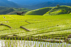 Terraced rice field in Pa Pong Pieng. Chiang Mai ,Thailand. Stock Photo