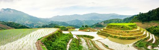 Terraced rice field panorama with stunning scenery royalty free stock image