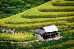 Terraced rice field Royalty Free Stock Photography
