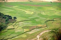 Terraced rice field in Sapa Stock Photo