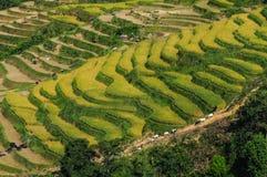 Landscape of terraced rice field in Vietnam stock image