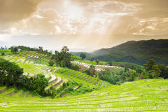 Terraced rice field with sun rays and dramatic sky in Pa Pong Pieng. Chiang Mai ,Thailand Stock Image