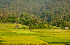 Terraced Rice Field. In Thailand Stock Image