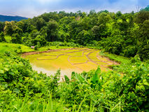 Terraced rice field in Thailand. Terraced rice field in the jungle of Thailand Stock Photos