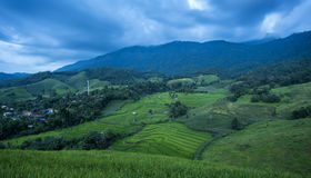 Terraced Rice Field at twilight Stock Images