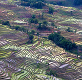 Terraced rice field in water season of Hani ethnic people in Yua Stock Photos