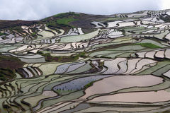 Terraced rice field in water season of Hani ethnic people in Yuanyang, China Royalty Free Stock Photography