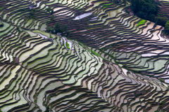 Terraced rice field in water season in Yuanyang, China Royalty Free Stock Images