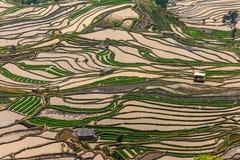 Terraced rice field. (Yuanyang Hani Stock Photo