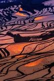 Terraced rice field. (Yuanyang Hani Stock Image