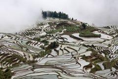 Terraced rice field in Yuanyang, Yunnan province, China Stock Photo