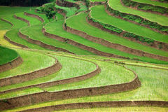 Terraced rice fields. Scenic view of green terraced rice or paddy fields, Vietnam royalty free stock photography