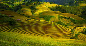 Terraced rice fields Royalty Free Stock Photo