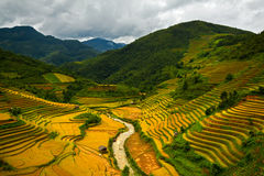 Terraced rice fields Stock Photos