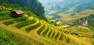 Free Terraced Rice Fields Royalty Free Stock Photo - 34357165