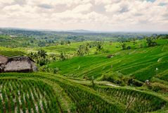 Terraced Rice Fields in Bali. With sun shining through the clouds stock images