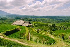 Terraced Rice Fields in Bali. With sun shining through the clouds stock photos