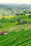 Terraced Rice Fields in Bali. With sun shining through the clouds stock photo