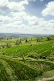 Terraced Rice Fields in Bali. With sun shining through the clouds royalty free stock images