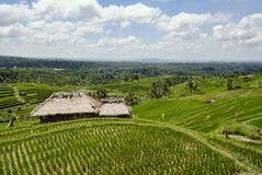 Terraced Rice Fields in Bali. With sun shining through the clouds stock image