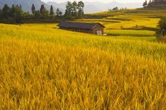 Terraced rice fields & Chinses house Stock Images