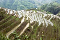 Terraced rice fields in Guilin, Longshan Stock Image