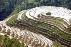 Terraced rice fields in Guilin, Longshan Stock Photo