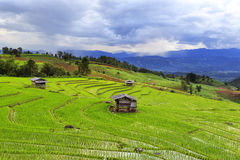 Terraced Rice Fields Hill Stock Photo