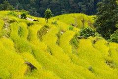 Terraced rice fields. Himalayas, Nepal Royalty Free Stock Photos