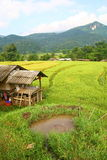 Terraced rice fields and house view, Thailand Royalty Free Stock Photography