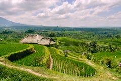 Free Terraced Rice Fields In Bali Stock Photos - 141784913