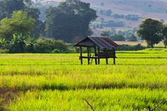 Free Terraced Rice Fields In Northern Thailand Royalty Free Stock Photos - 28301708