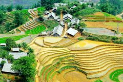 Terraced Rice Fields In Vietnam Stock Image