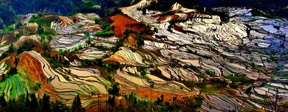 Terraced rice fields in Laohuzui Yuanyang Stock Image
