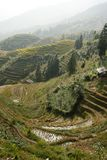 Terraced Rice Fields of Longsheng County Stock Image