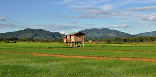 Terraced rice fields. Terraced rice fields in Luang Namtha , Laos royalty free stock photography