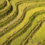Terraced rice fields near Guilin, Royalty Free Stock Photography