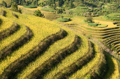 Terraced rice fields near Guilin, Guangxi Stock Images