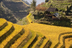 Terraced rice fields near Guilin, Guangxi Stock Image
