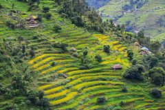 Terraced rice fields in Nepal Stock Photography