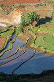 Terraced Rice fields. The terraced paddy fields of the central highlands of Madagascar are mainly occupied by rice fields, farmed by traditional agriculture Royalty Free Stock Image