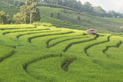 Terraced Rice fields Stock Photos