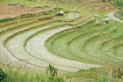 Terraced rice fields in Sri Lanka.  Royalty Free Stock Image