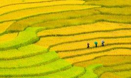 Terraced rice fields Royalty Free Stock Photos