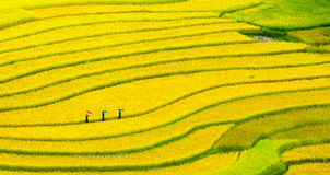 Terraced rice fields - three women visit their rice fields in Mu Cang Chai, Yen Bai, Vietnam Stock Photos