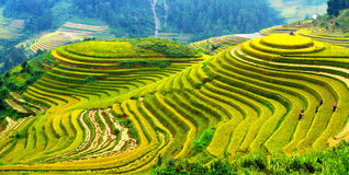Terraced rice fields - three women visit their rice fields in Mu Cang Chai, Yen Bai, Vietnam Royalty Free Stock Image